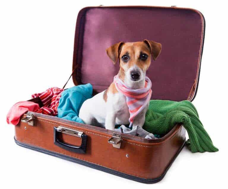 Dog Vacation Simplify Life