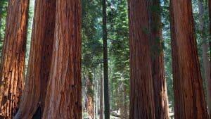 Sequoia National Park - California - United States
